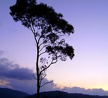 Purple tree silhouette by Gudrun Eckleben