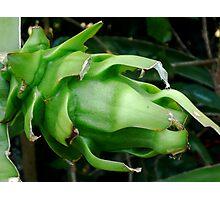 Green Pitaya Photographic Print