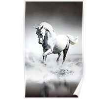 Water Horse Poster
