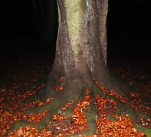 Tree at night by 4Flexiway