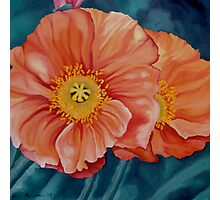 California Poppies Photographic Print
