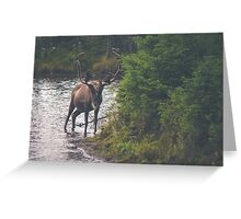 Stag by the River Greeting Card