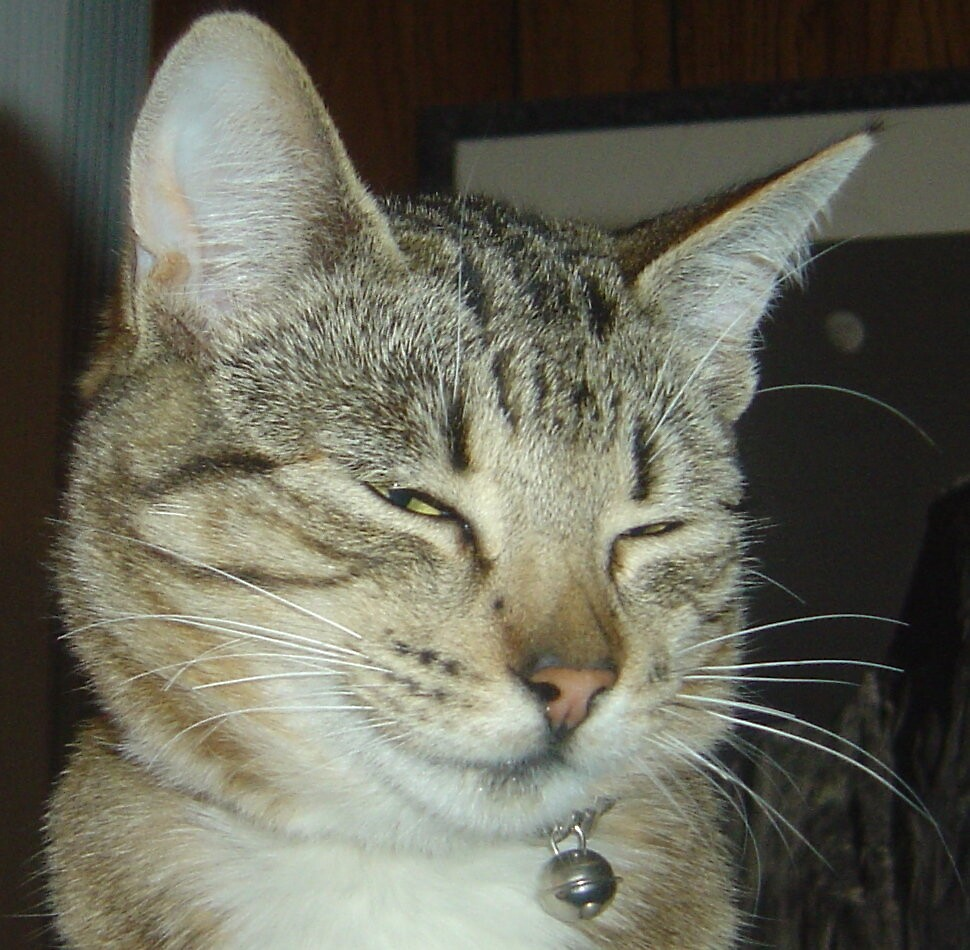Smirking Cat by Jerry Stewart