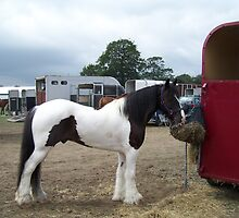 Gypsy Vanner .. a stallion by LoneAngel