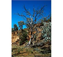 Outback Flinders Photographic Print