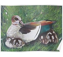 Kensington Chicks, Majestic Mother, Egyptian Geese at the Round Pond Poster