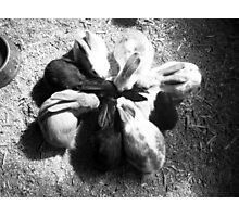 Bunnies getting together Photographic Print