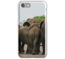 Elephants (Loxodonta africana) iPhone Case/Skin