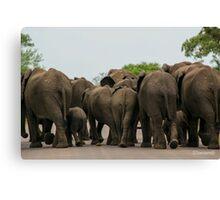 Elephants (Loxodonta africana) Canvas Print