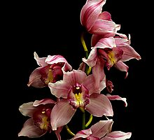 Pink and White Orchid Bouquet by Swede