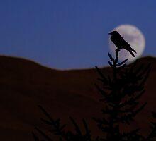 Night falls by bundug