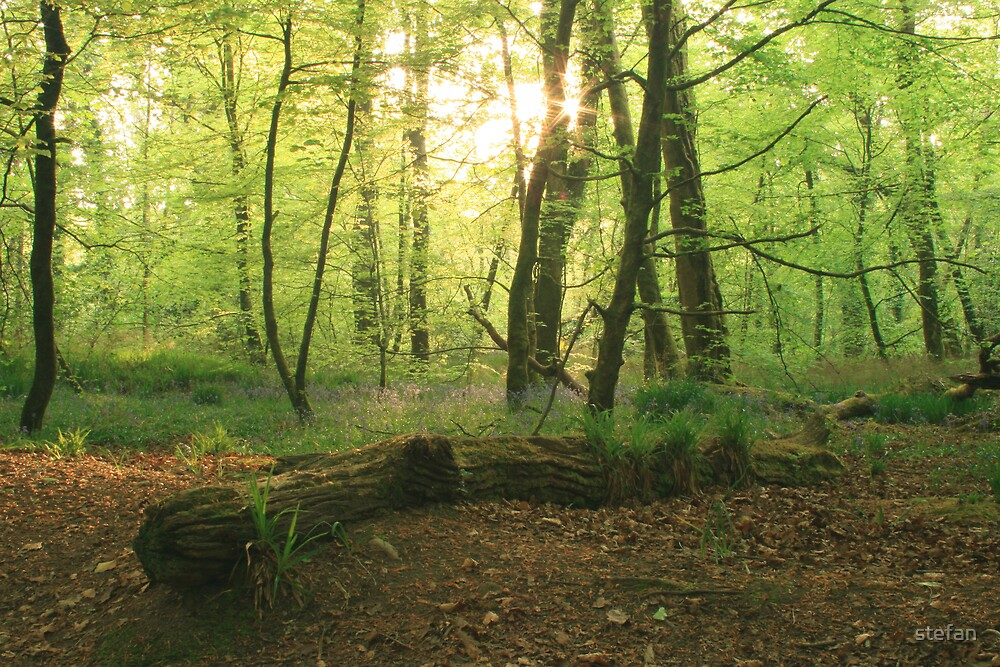 woodland walk by stefan