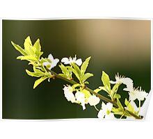 Blossom. Contrast Poster
