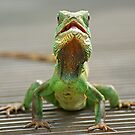 Little green reptile ! by Mark Thompson