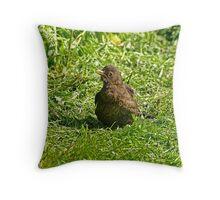 Female blackbird Throw Pillow