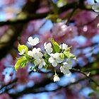 Floral Friends by Mats Janné
