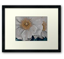 White Poppies Framed Print