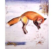 Vixen on the Hunt! Photographic Print