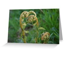 Natures Wonder Greeting Card