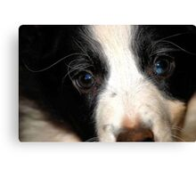 EYES  IN PEACE Canvas Print