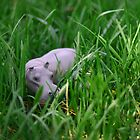 hippo by leroylovesmabel