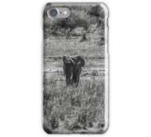 Three Elephants (Loxodonta africana) iPhone Case/Skin