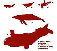 Whale Comparison Chart, TR Photographic Print
