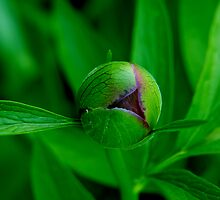 flower ball ... by SNAPPYDAVE