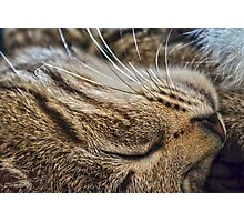 Dreaming of Mice (Amazing Challenge Entertainment) Photographic Print