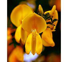 yellow wonder ... Photographic Print