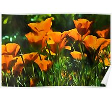 Brilliant Orange California Poppies - Impressions of Desert Spring Poster