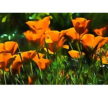 Brilliant Orange California Poppies - Impressions of Desert Spring Photographic Print