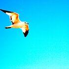 sea eagle by lucamaphoto