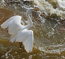 Frolic in the Froth by Bonnie T.  Barry