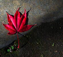 Fallen Leaf I by FuriousEnnui