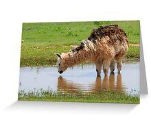Llama on the Farm Greeting Card