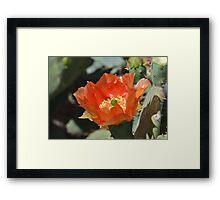 Cactus Flower Center Framed Print