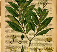 Botanical print, on old book page by Art Dream Studio