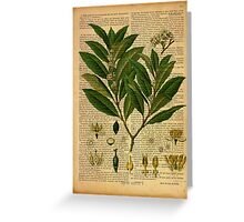 Botanical print, on old book page Greeting Card