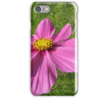 Mexican aster iPhone Case/Skin