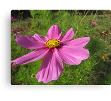 Mexican aster Canvas Print