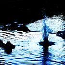 Splashdance by Luke Jones