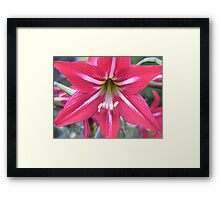 johnson lily Framed Print
