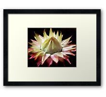 Paper weight... Framed Print