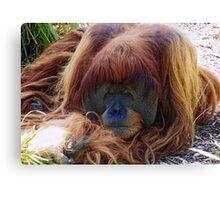 Orangutan Sadness Canvas Print