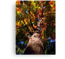 Fire Maple Canvas Print