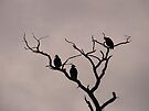 Turkey Vultures by elasita
