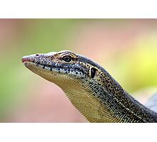Water Monitor Photographic Print