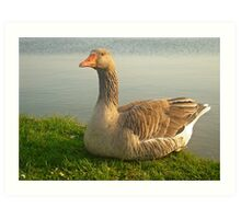 Goose. Art Print