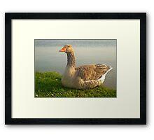 Goose. Framed Print